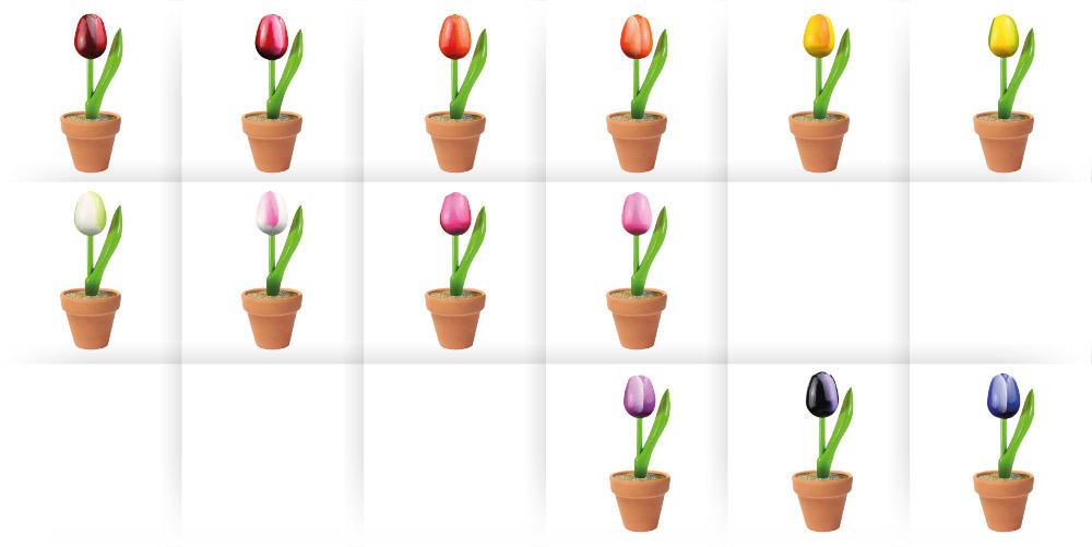 tulip potjes